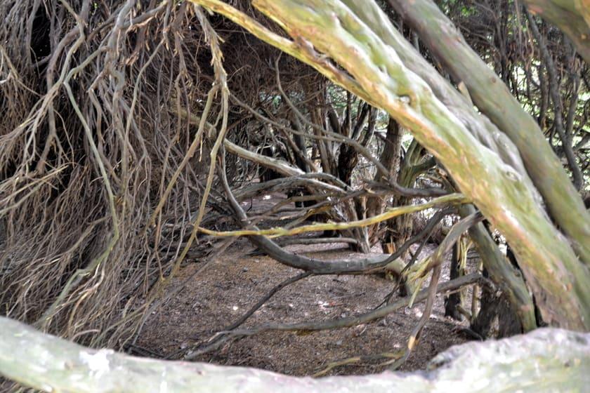 oeroude bomen en hagen bij jachtslot Clemenswerth