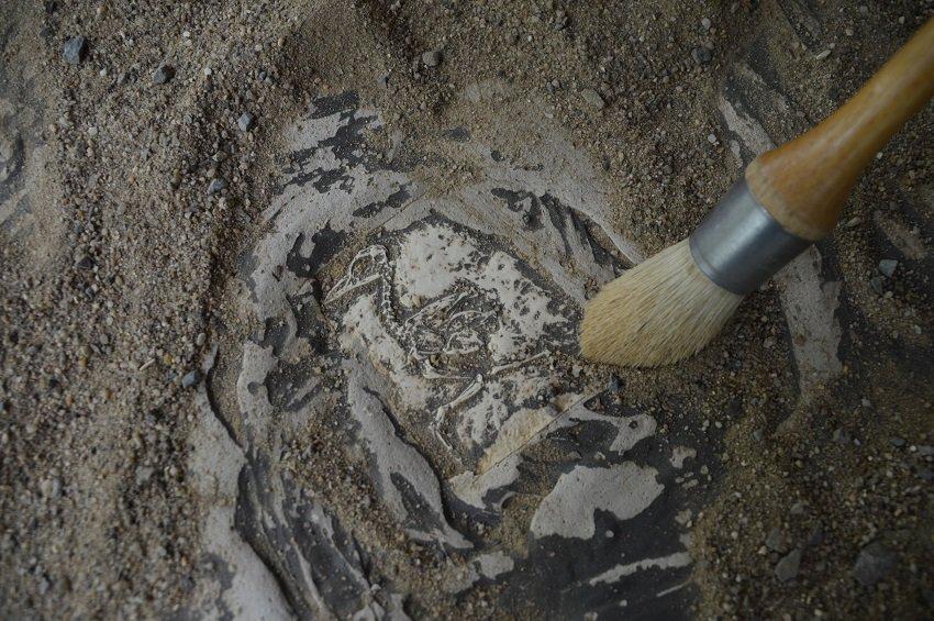 Dinosaurussen opgraven in Xploria