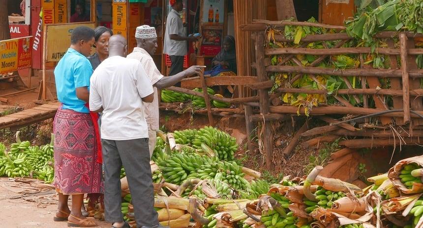 Matoke (groene banaan) wordt traditioneel lang gestoofd op een smeulend vuurtje. Een cookstove levert grote winst voor mens en milieu.
