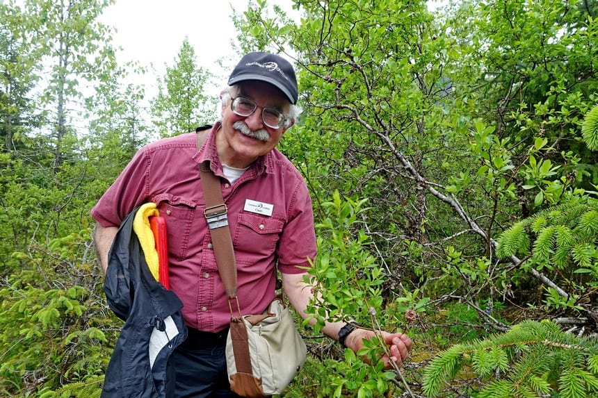 Gids Cal regenwoud Alaska