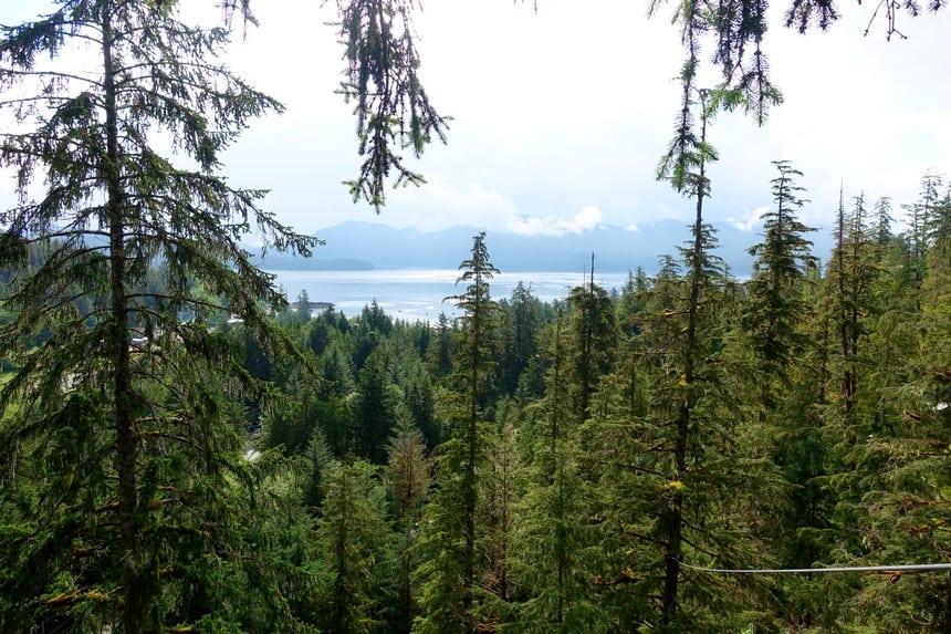 Regenwoud Alaska