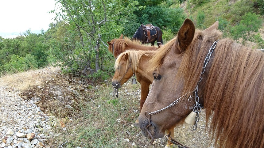 paardrijtocht ohrid