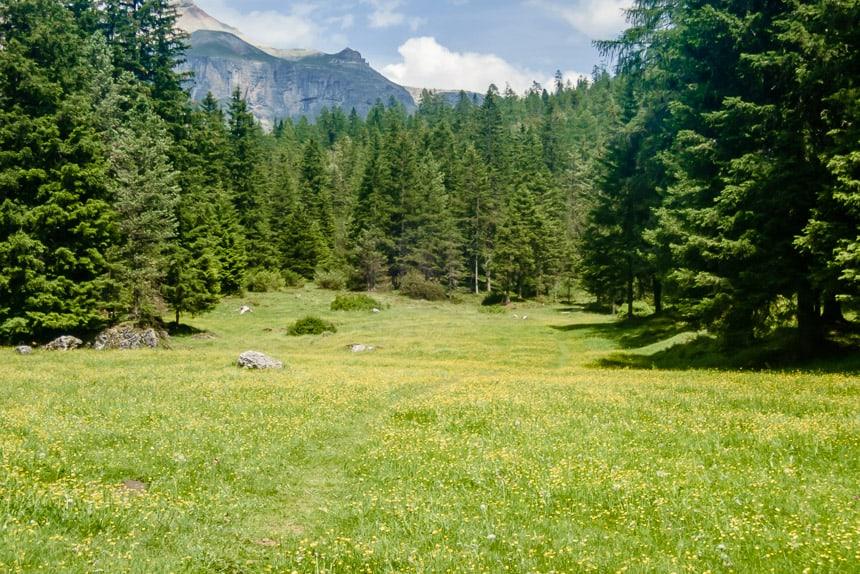 Alpengroen in Val Gardena