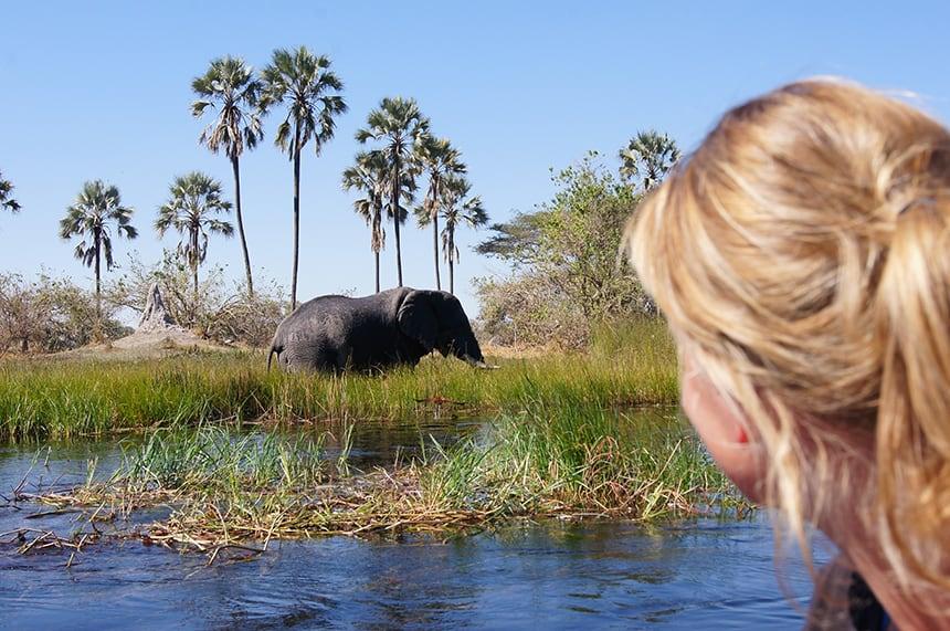 Olifant Okanvango Delta