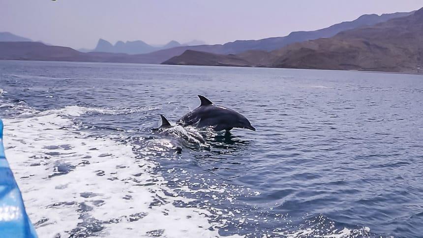 Dolfijnen zwemmen met de boot mee