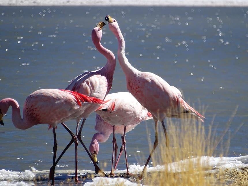 flamingo canapa lagoons
