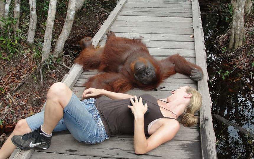 De bossen van Sumatra zijn voor vele bedreigde diersoorten een toevluchtsoord