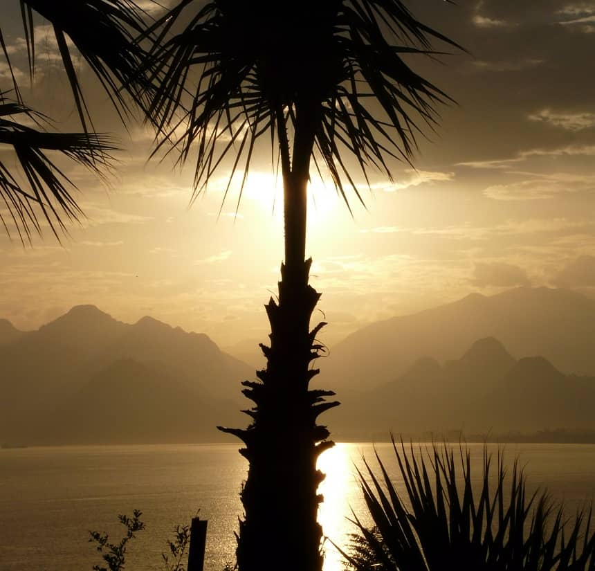 turkije palmen
