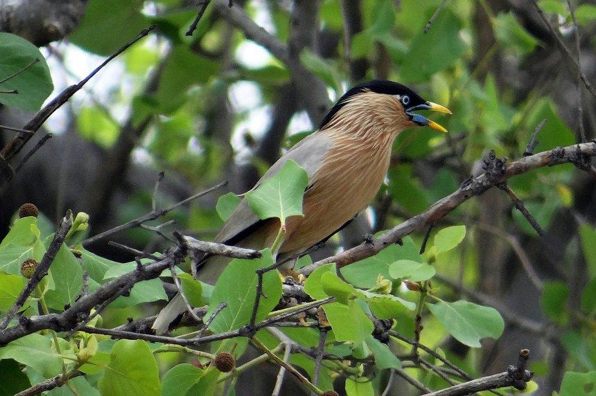 Vogels spotten in het Nationaal Park Keoladeo.