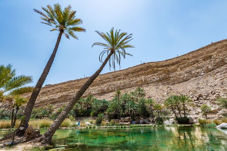 Palmen in Wadi Bhani Khalid