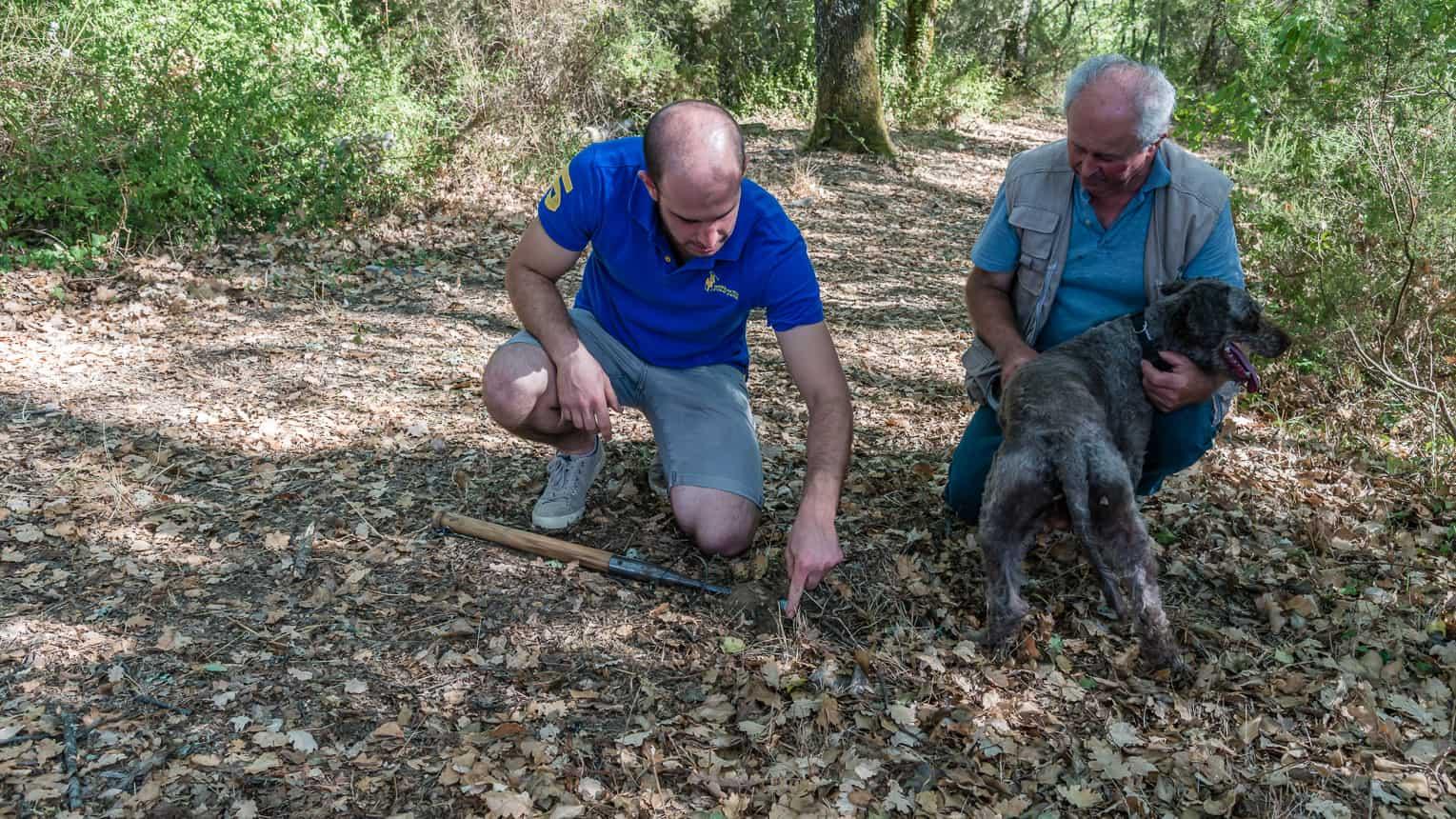 Hond Theo heeft de truffels snel gevonden
