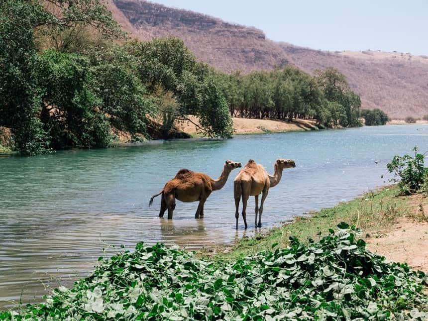 Middenoostenreizen.com - Wadi Darbat