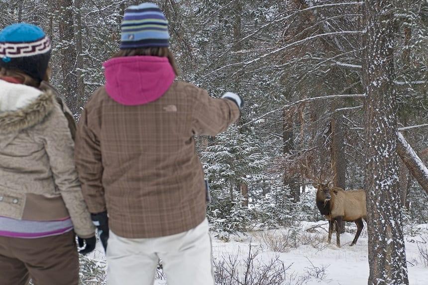 elk canada