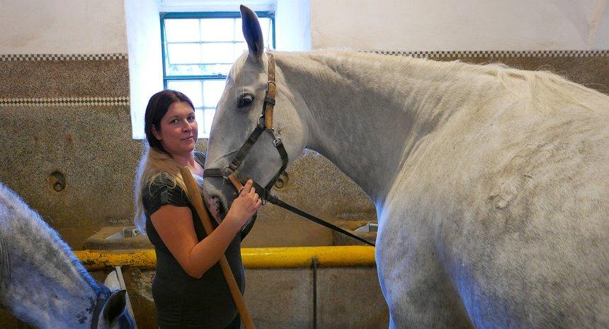 De paarden lopen vooral voor koninklijke koetsen.