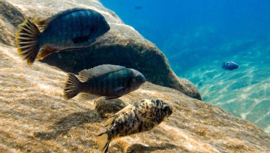 Duiken in het Malawimeer
