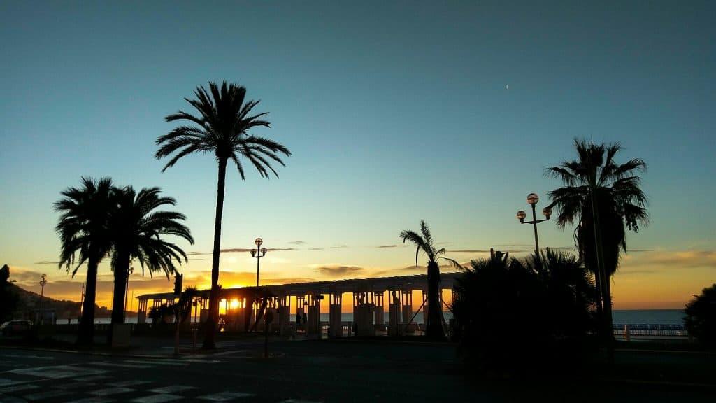palmbomen in Nice