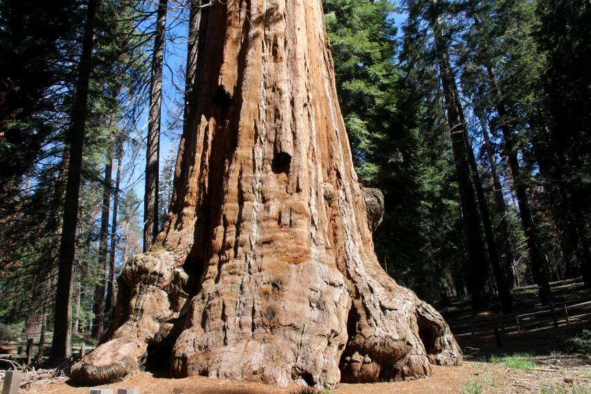 Rondreis Amerika: Kings Canyon heeft de hoogste bomen ter wereld