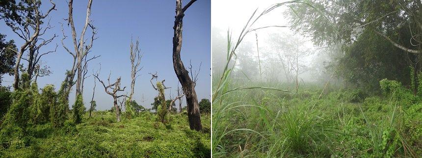 chitwan jungle