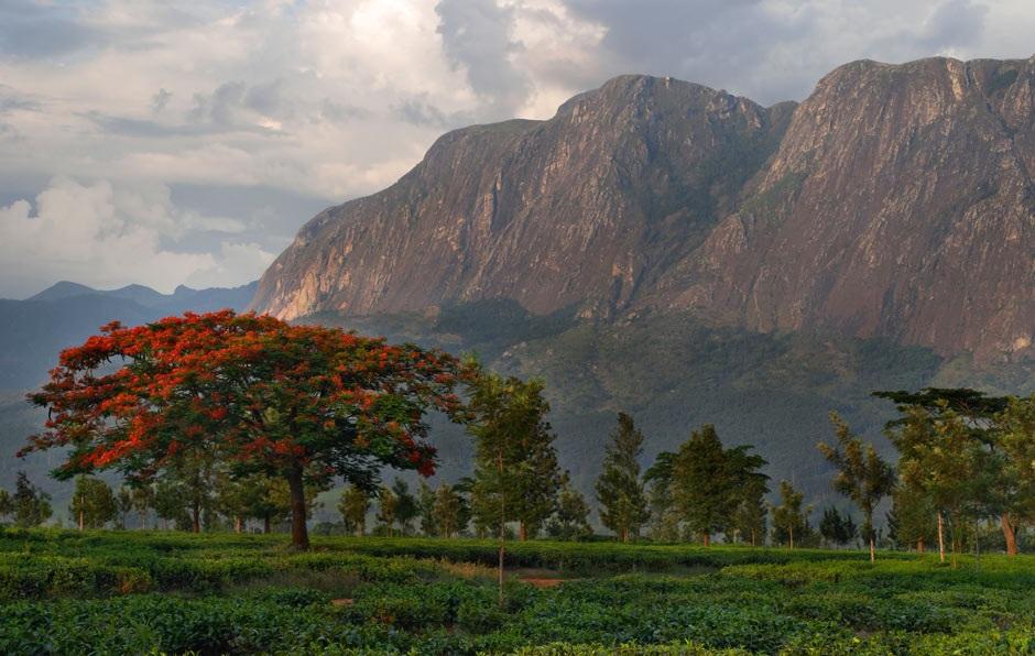 Mount Mulanje, de hoogste berg van Centraal-Afrika