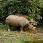 (Een) wild leven in Chitwan