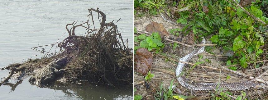 wildlife chitwan