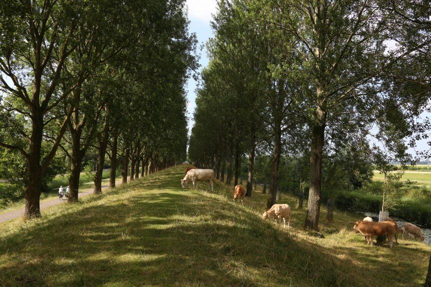 De liniedijk dwars door de Haarlemmermeer