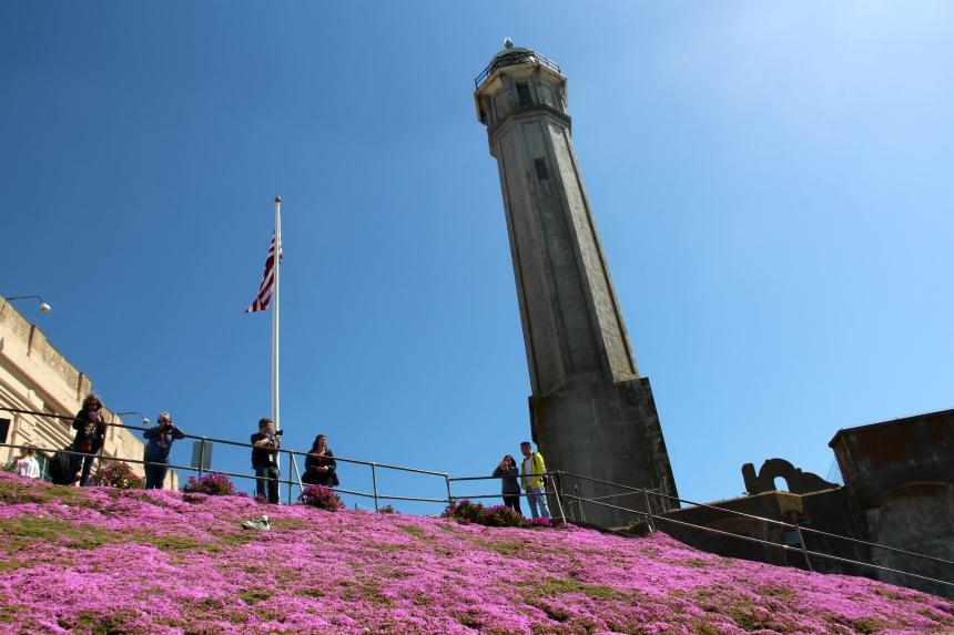 Op het eiland Alcatraz vind je veel bloemen en vogels