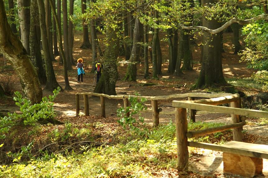 Wandelen door de de beukenbossen van Nationaal Park Jasmund