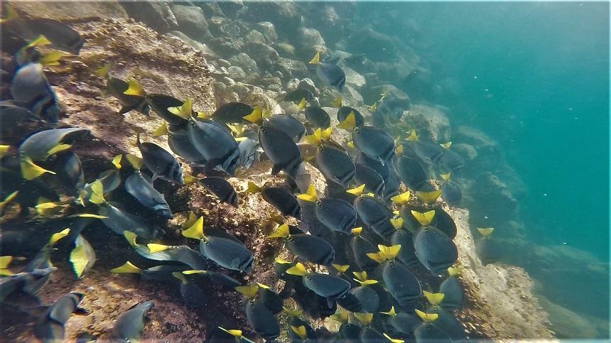 blauw-met-gele-visschool