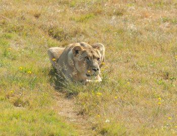 Lionsrock Lodge & Big Cat Sanctuary