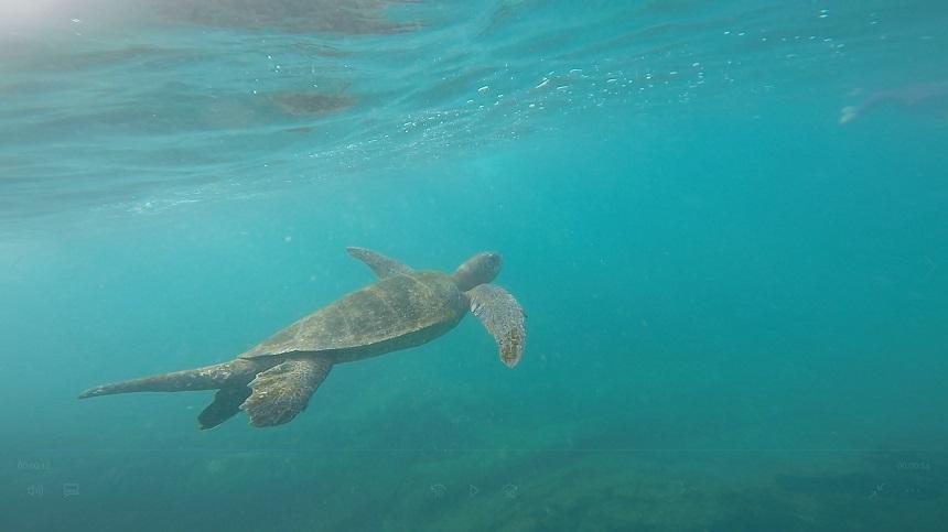 Een dobberende schildpad