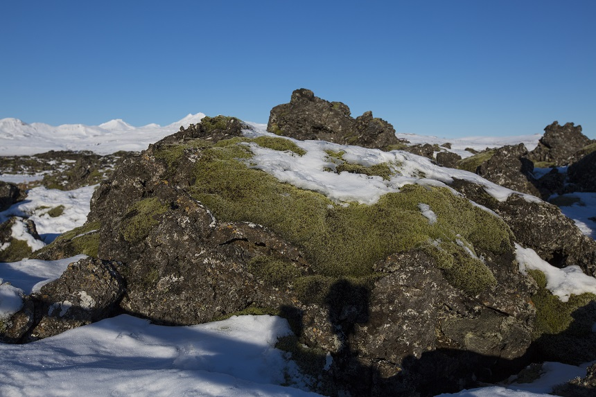 De met sneeuw en mos bedekte lavavelden