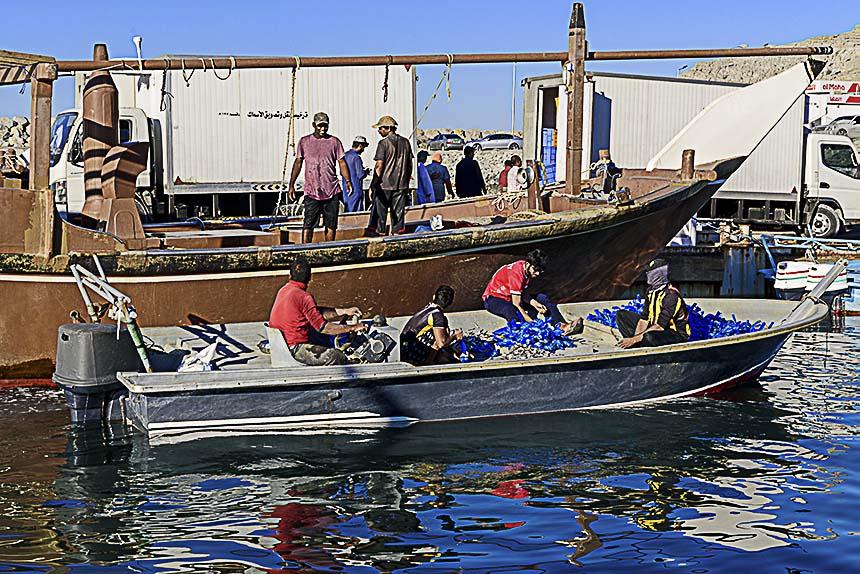 De hele dag zijn de vissers van Khasab druk in de weer