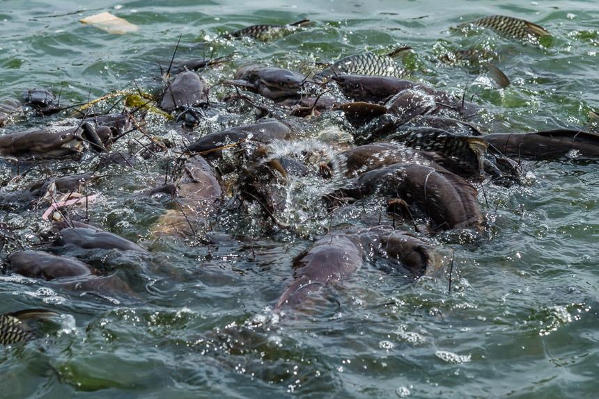 Vissen voeren in That Phanom