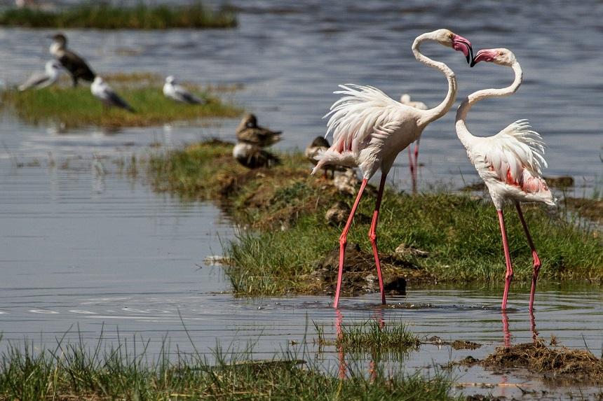 Lake Nakuru in Kenia
