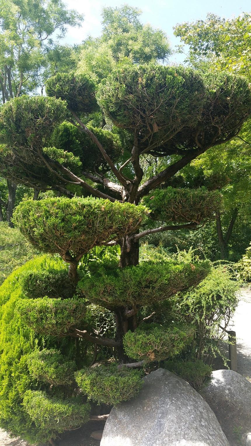 Je ziet de mooiste bomen in de Japanse tuin