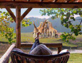 Slapen tussen de leeuwen in Safari Resort Beekse Bergen