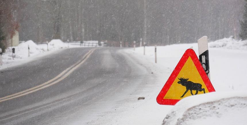 Ingesneeuwd in maart in Zuid-Zweden. Niet helemaal normaal...
