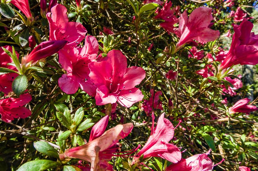 Bloemen, Madeira