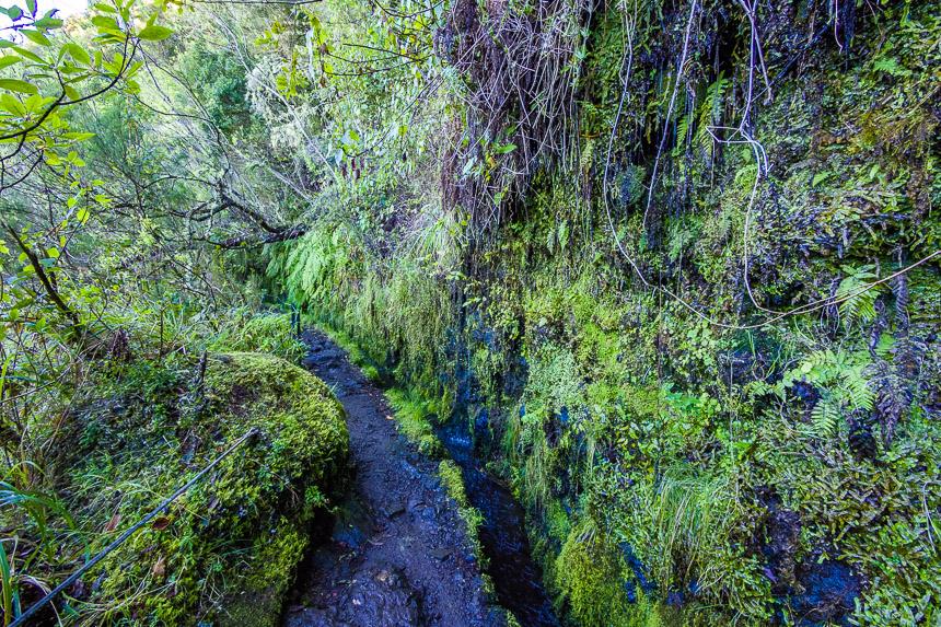 Levada wandelpad, Madeira