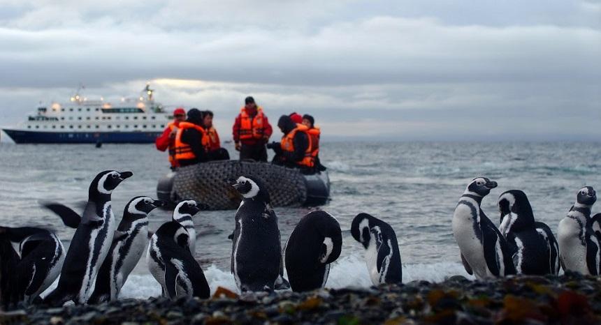 Magelhaense pinguïns