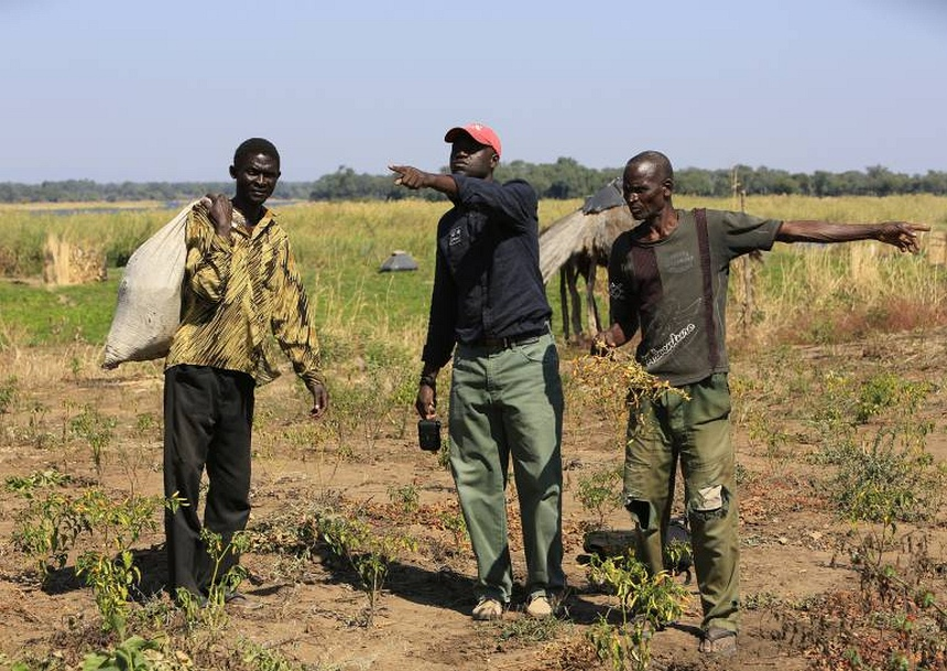 Boeren leren hoe ze met het verbouwen van chili-peper olifanten kunnen weren.