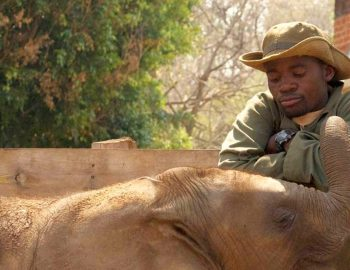 Zambia – olifanten redden in Afrika