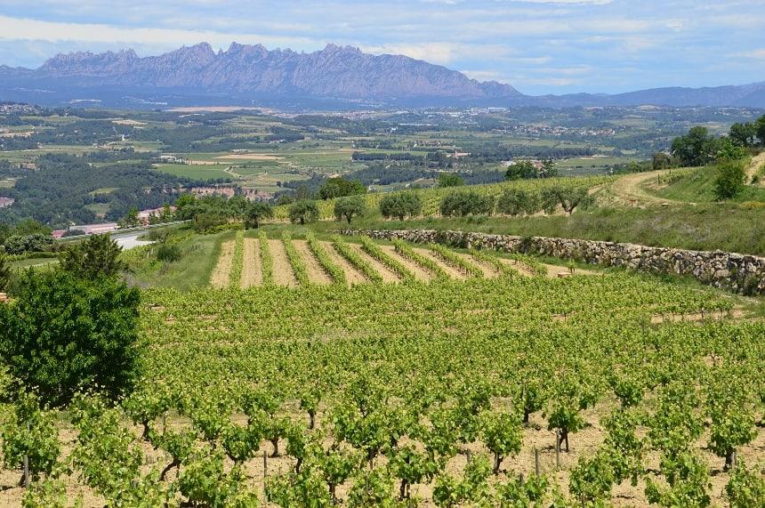 De wijngaarden van Penedès
