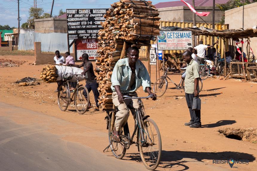 Ook een flinke houtstapel is geen probleem op de fiets