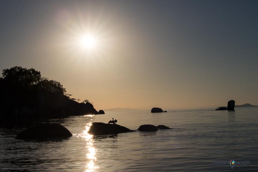 Rondom Mumbo Island zijn een aantal vogelsoorten te spotten