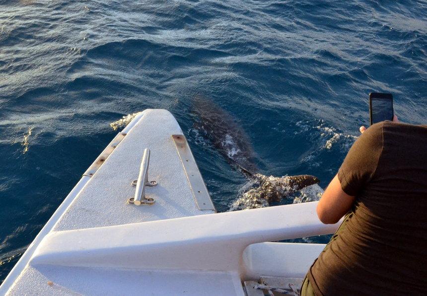 Dolfijnen op Sint Maarten