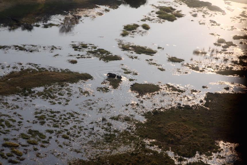 Olifanten aan de wandel. De Okavango Delta in Botswana