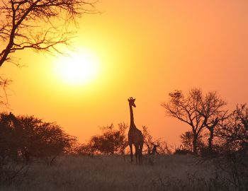 8 dingen die je moet weten over Kruger Park