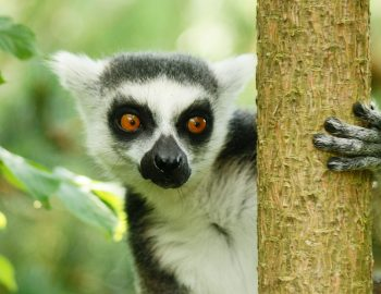 Biodiversiteit op Madagaskar